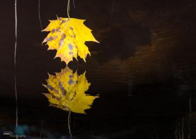 Høstløv 20.10.2018