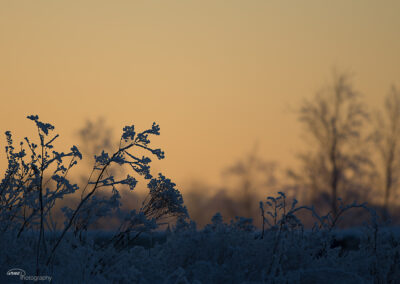 Frost 21.01.2016