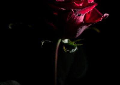 Rose 16.02.2020