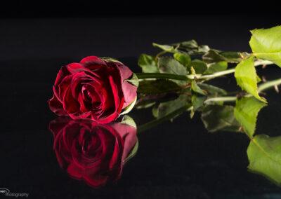 Rose 06.02.2016